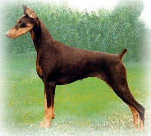 Doberman%20Pinscher_Dog.jpg